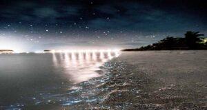 Why Does Maldives Beach Glow at Night