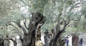 Why is the Garden of Gethsemane Important