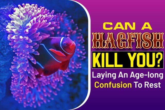 Can A Hagfish Kill You