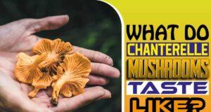 What Do Chanterelle Mushrooms Taste Like